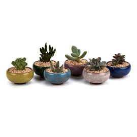 Vasetti per piante grasse