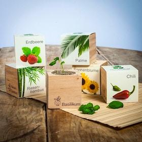 Ecocube Piante in cubi di legno