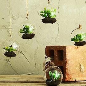 Mini piante grasse in bolla di vetro