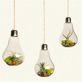 Mini terrario sospeso nel bulbo di una lampadina