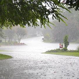 Rain gardens: i giardini che ci salvano dalle bombe d'acqua