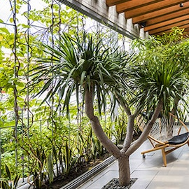 House for trees: le case per alberi di Vo Trong Nghia