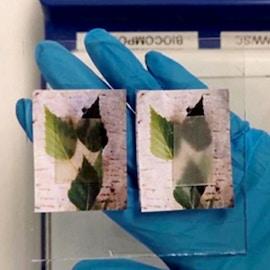 Legno trasparente: innovativo materiale ecologico per la bioedilizia