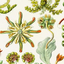 Il meraviglioso universo delle piante attraverso le illustrazioni di artisti e botanici