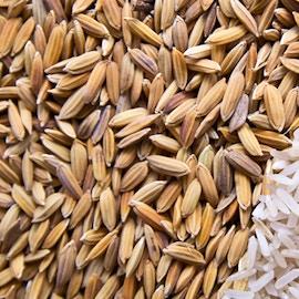 Materiali innovativi per l'edilizia dagli scarti del riso