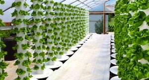 Coltivazioni idroponiche in serra